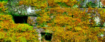 Parede de pedra de Mossed Fotografia de Stock