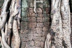 Parede de pedra do bloco com superar raizes da árvore Fotos de Stock Royalty Free
