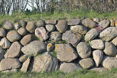 Parede de pedra do Frisian na ilha de Sylt com deadnettle fotografia de stock royalty free