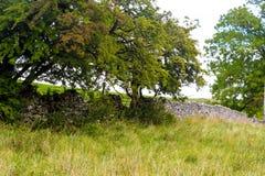 Parede de pedra e árvores Fotos de Stock