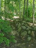 Parede de pedra nas madeiras Foto de Stock