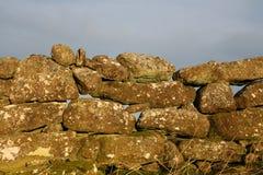 Parede de pedra seca, Dartmoor imagem de stock royalty free