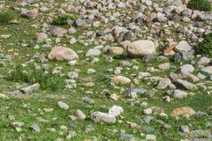 Parede de pedra velha com textura verde da hera fotografia de stock