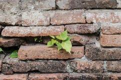 Parede de tijolo antiga e pouca árvore Imagens de Stock