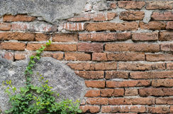 Parede de tijolo antiga e pouca árvore Imagem de Stock