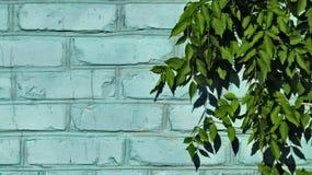 Parede de tijolo azul e folhas verdes imagens de stock royalty free