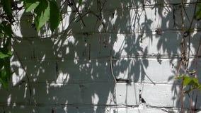Parede de tijolo branca no dia de verão ensolarado video estoque