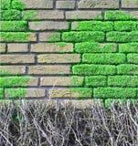 Parede de tijolo coberta com os moos Fotos de Stock