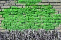 Parede de tijolo coberta com os moos Fotografia de Stock