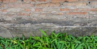 Parede de tijolo com conversão verde Imagem de Stock Royalty Free
