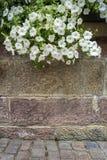 Parede de tijolo com flores de suspensão Fotografia de Stock