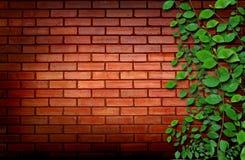 Parede de tijolo com plantas de escalada Imagem de Stock