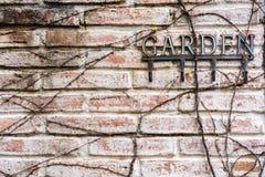 Parede de tijolo com raiz do JARDIM da árvore e do texto fotografia de stock