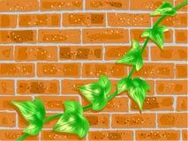 Parede de tijolo com videira verde Imagens de Stock Royalty Free