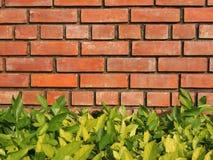 A parede de tijolo da casa e das folhas fotos de stock