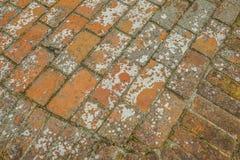 Parede de tijolo de um forte histórico 3 da guerra civil Fotografia de Stock