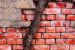 Parede de tijolo e tronco de árvore Imagens de Stock Royalty Free
