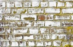 A parede de tijolo golpeou por um fungo imagem de stock royalty free