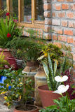 Parede de tijolo rústica alinhada com as plantas em umas latas do leite Foto de Stock