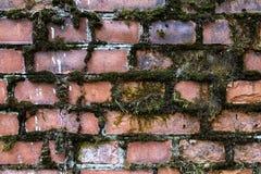 Parede de tijolo velha coberto de vegetação com o musgo verde imagem de stock royalty free