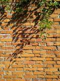 Parede de tijolo velha com planta Fotografia de Stock Royalty Free