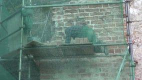 Parede de tijolo velha da igreja do reparo do trabalhador vídeos de arquivo