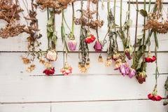 Parede decorada com flores secas Imagem de Stock Royalty Free