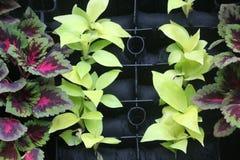 Parede decorada por plantas coloridas na casa imagem de stock royalty free