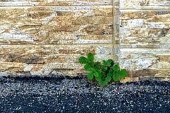 Parede decorativa 19 Imagens de Stock