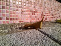 parede defoliation Queda cerâmico telha Imagens de Stock Royalty Free