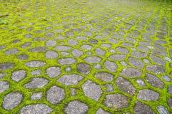 Parede do bloco de cimento com musgo verde fotografia de stock royalty free