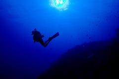 Parede do caimão Imagem de Stock Royalty Free