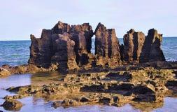 Parede do coral na ilha de Moçambique Imagens de Stock Royalty Free