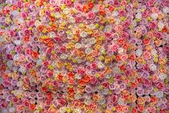 Parede do fundo das rosas imagem de stock royalty free