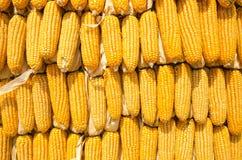 Parede do milho Imagem de Stock