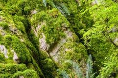 Parede do musgo Foto de Stock