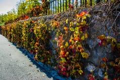A parede do outono no Pequim Imagens de Stock