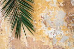 Parede do vintage antigo rachado velho e palma tradicionais históricas t Fotografia de Stock