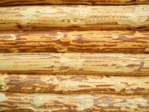 Parede dos logs do pinho Fotografia de Stock Royalty Free