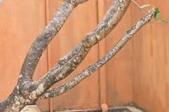 Parede e árvore Fotos de Stock