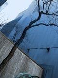 Parede e árvore da água fotografia de stock royalty free