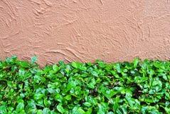 Parede e folhas do cimento Fotografia de Stock