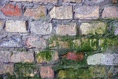 Parede e musgo velhos de tijolo Fotografia de Stock