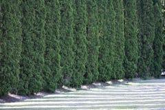 Parede e sombras verdes imagem de stock royalty free