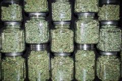 A parede empilhada dos frascos de vidro encheu-se com os botões verdes da marijuana Fotografia de Stock