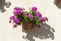 Parede espanhola com flores a Andaluzia imagens de stock