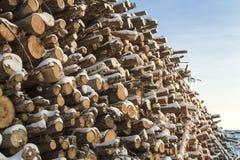 Parede feita da madeira empilhada Foto de Stock