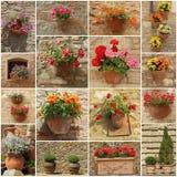 Parede floral Imagens de Stock Royalty Free