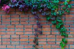 Parede no jardim velho Imagem de Stock