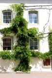 Parede Overgrown da casa Imagem de Stock
